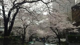 出先で花見をしながら仕事できるなんて贅沢すぎる。タクシーに転職してよかったなーと実感した1日【乗務記録30日目】